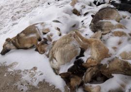 На трассе под Екатеринбургом найдены десятки мертвых собак